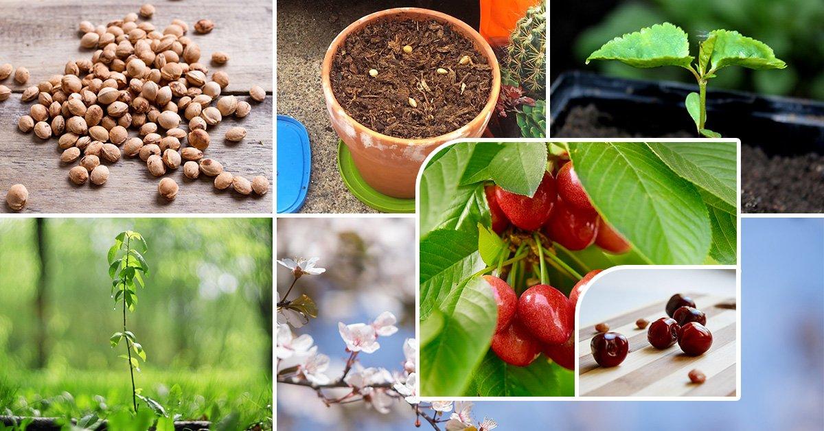Технология выращивания тюльпанов в теплице к 8