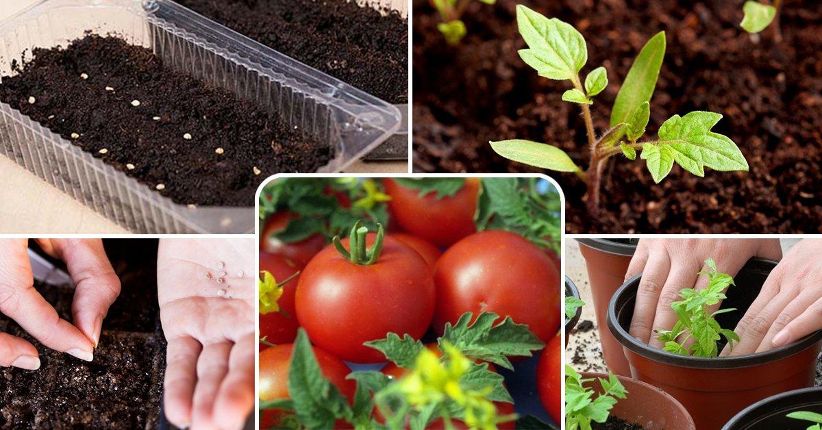 Полезные советы дачникам и огородникам по посеву семян, высадке рассады в грунт, уходу за посадкой, защите от вредителей, сбору урожая, подготовке почвы, сушке и хранению семян, заготовкам на зиму