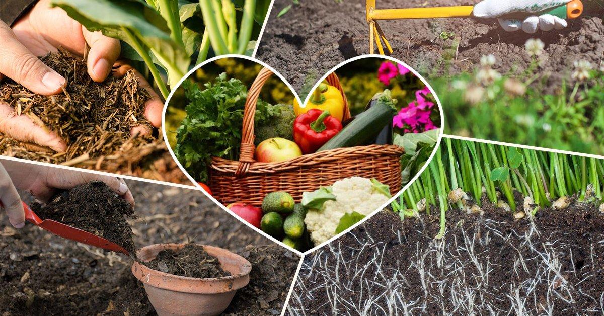 Плодородный грунт для хорошего урожая