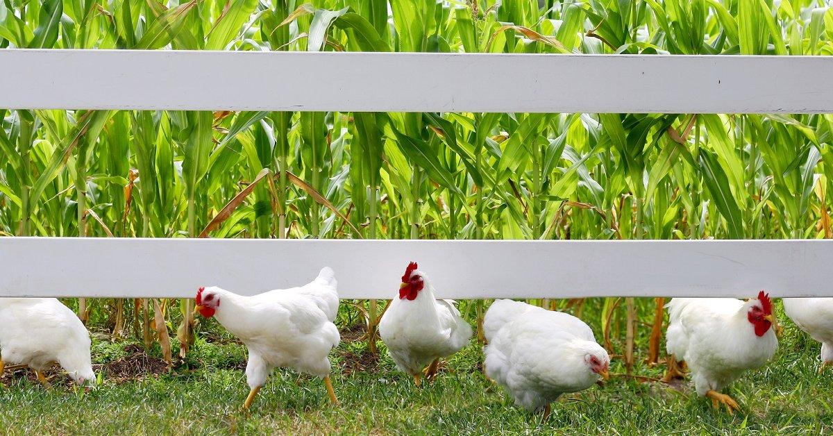 Какой забор можно ставить между соседями на даче по закону