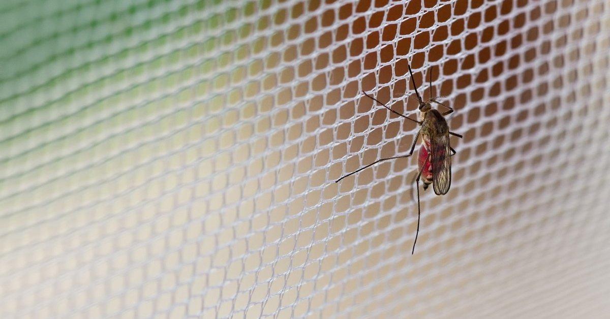 Сетка от комаров как называется
