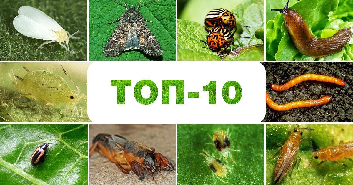 Самые прожорливые хищники насекомые