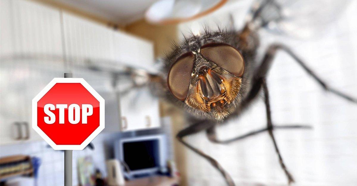 Как избавиться от мух на даче – читайте!