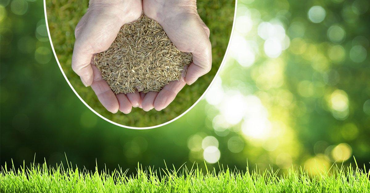 Какие семена газонной травы лучше