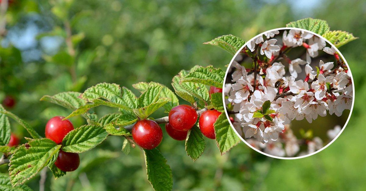 Плодово-ягодные культуры: основные группы и их особенности