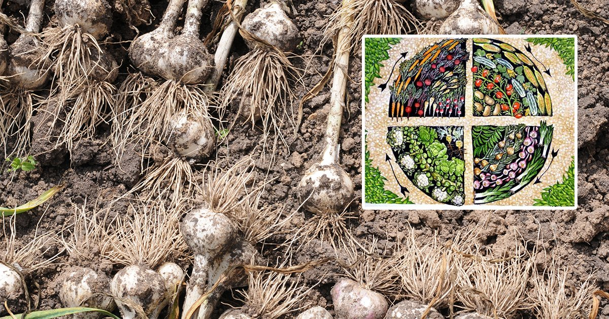 Что можно посадить после чеснока на будущий год: какие овощи можно высаживать