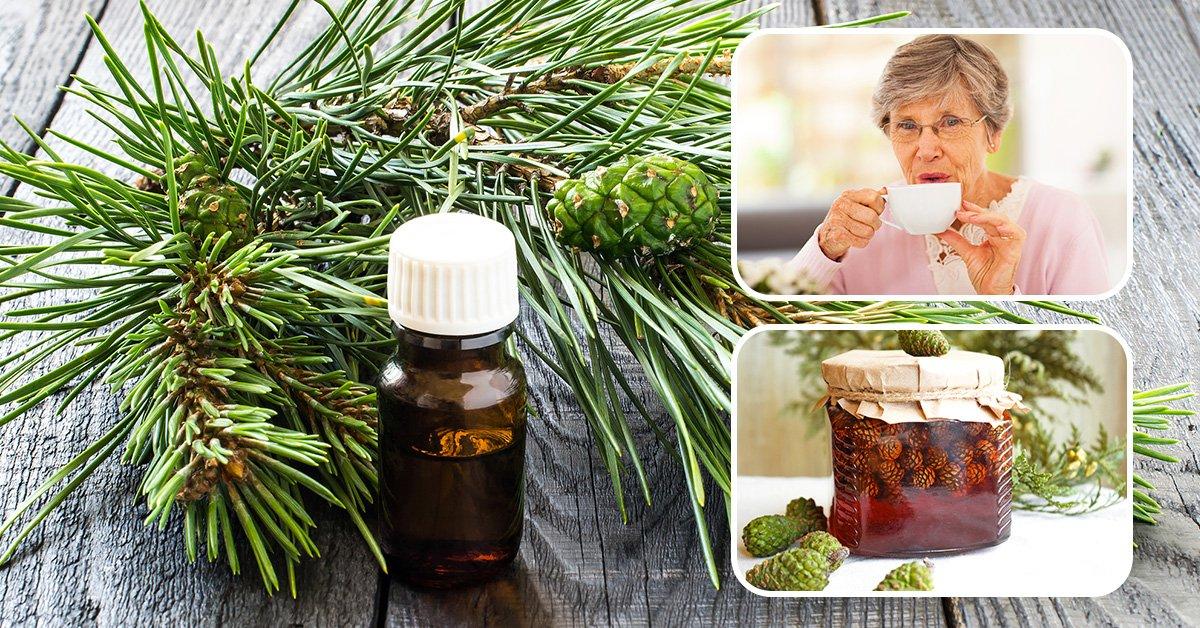 Сосновые шишки - лечебные свойства и противопоказания, приготовление настоя, отвара и сиропа