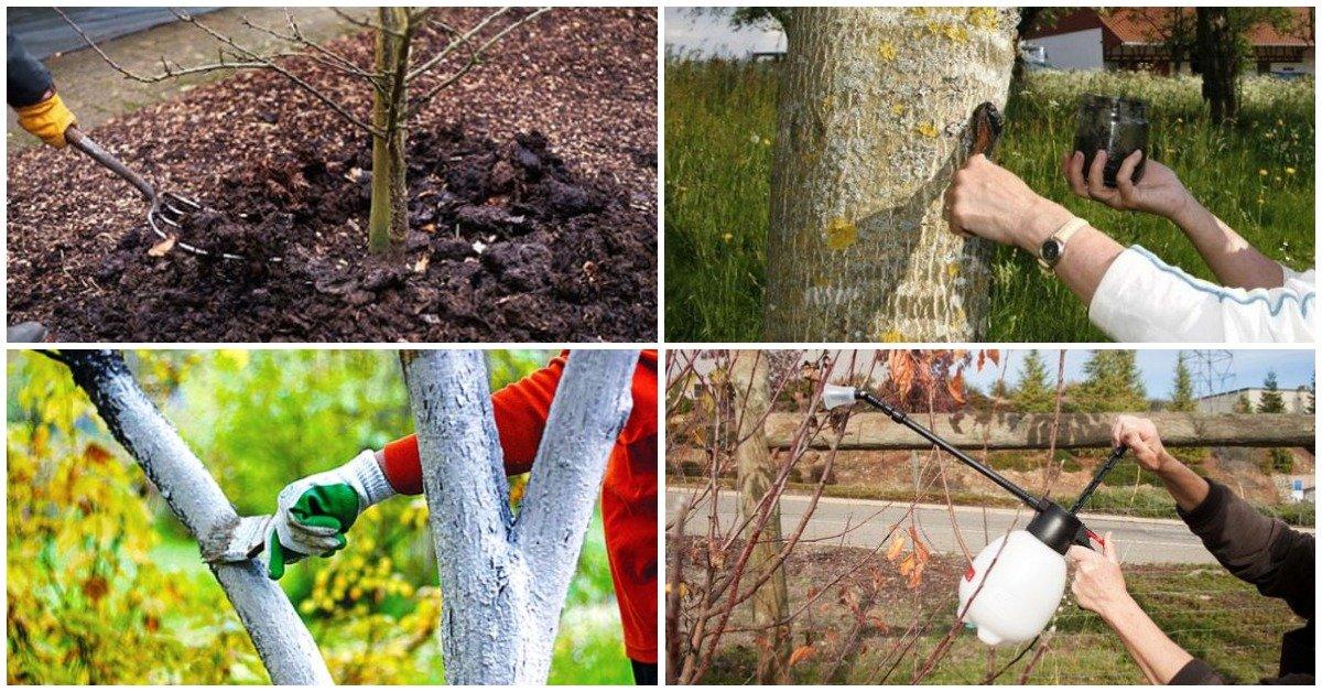 Как и чем произвести опрыскивание деревьев осенью