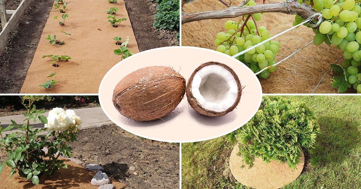 Кокосовые таблетки для рассады (брикеты, стружка, волокно)