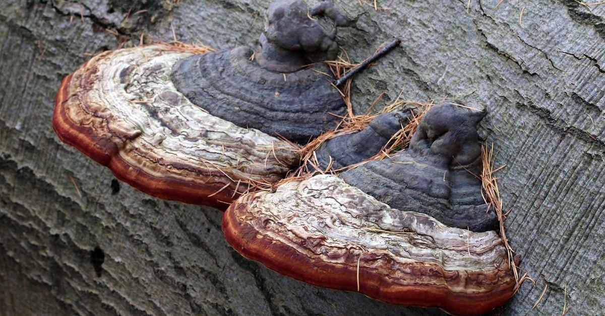 На деревьях выросли грибы? Как справиться с незапланированным урожаем