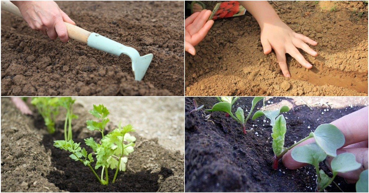 Подзимний посев овощей: что и как делать