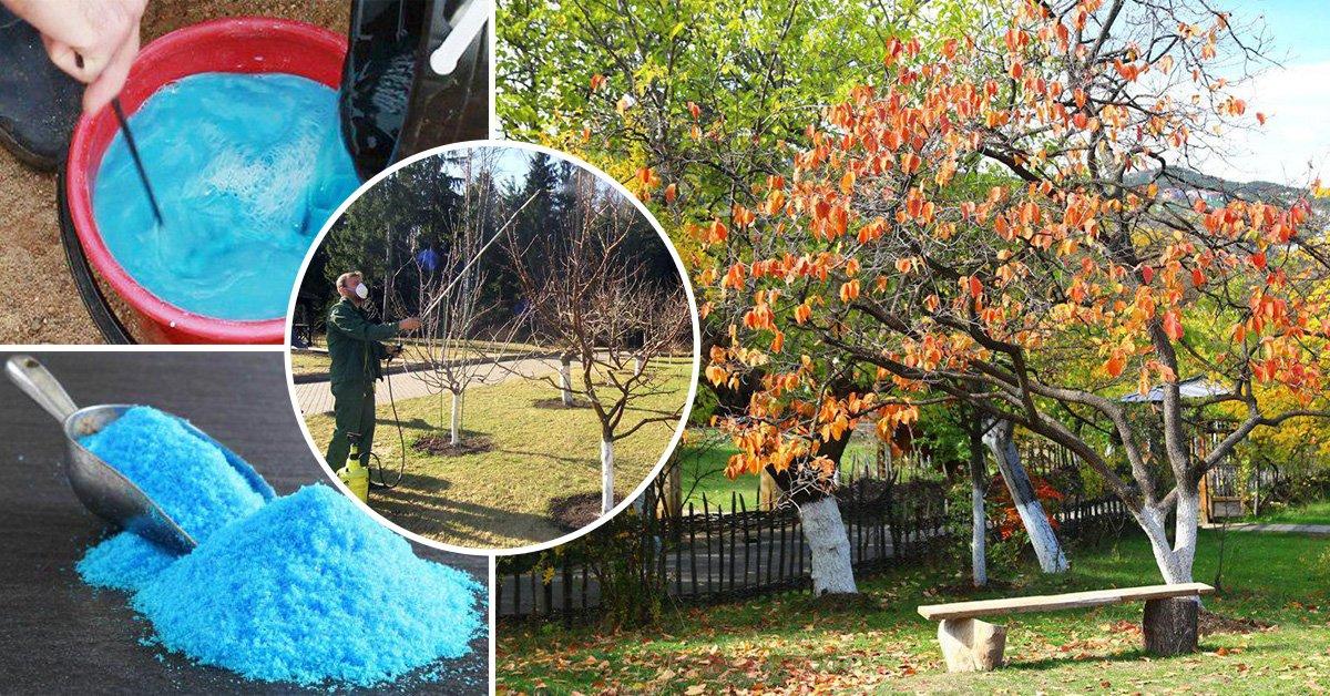 Применение медного купороса в садоводстве осенью и весной: правила обработки, инструкция и дозировка