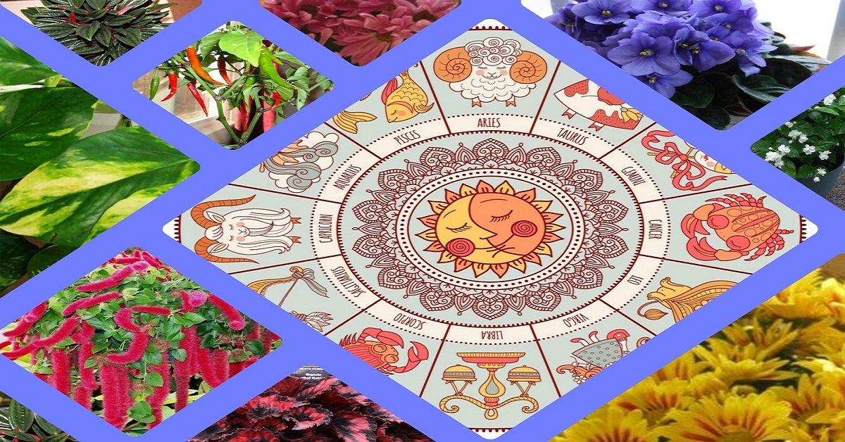Комнатные цветы для знака зодиака лев