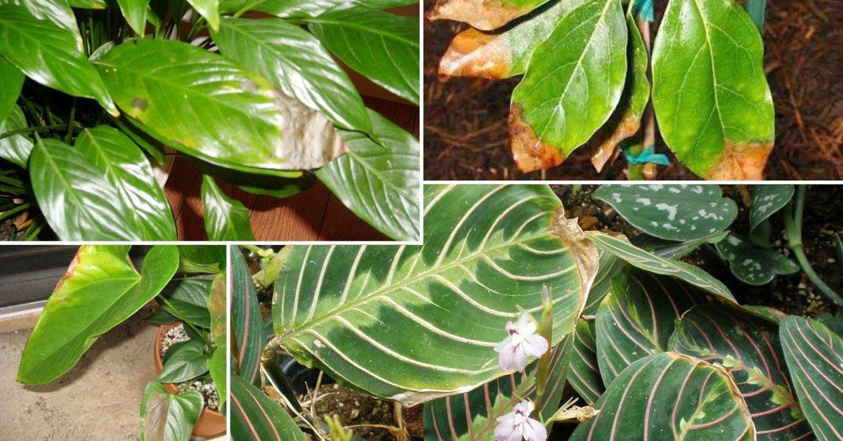 Причины, по которым чахнут, вянут и гибнут домашние растения