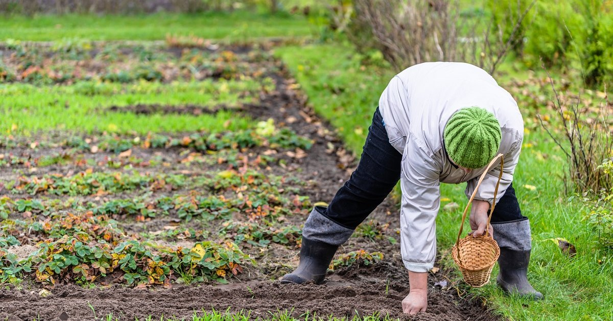Что можно посадить под зиму сорта овощей для подзимних посевов