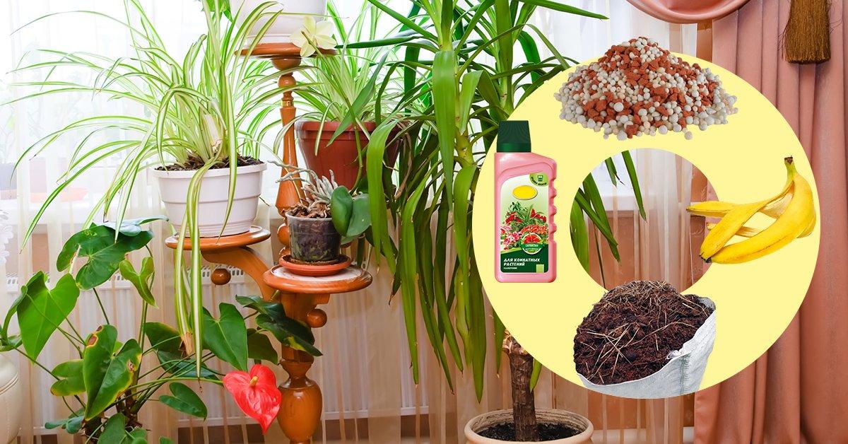 Чем лучше поливать домашние цветы