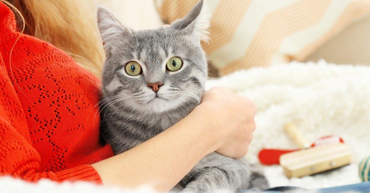 Любящие котики