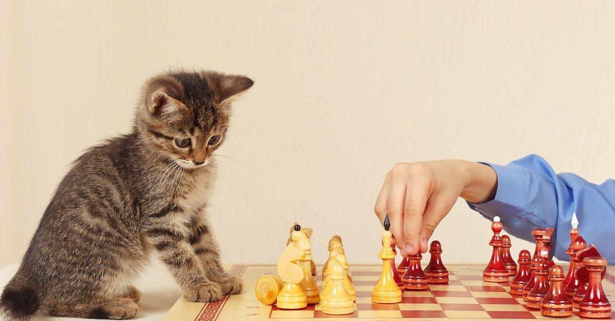 Как научить кота трюкам и командам — дрессировка кошек в домашних условиях