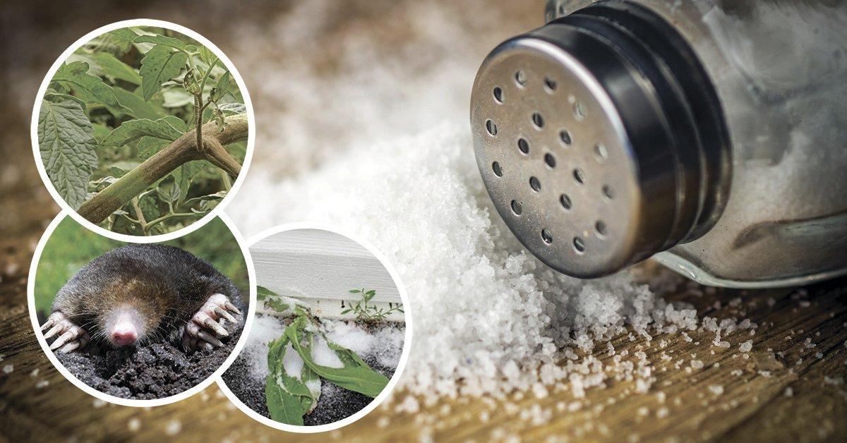 Насекомые в соли