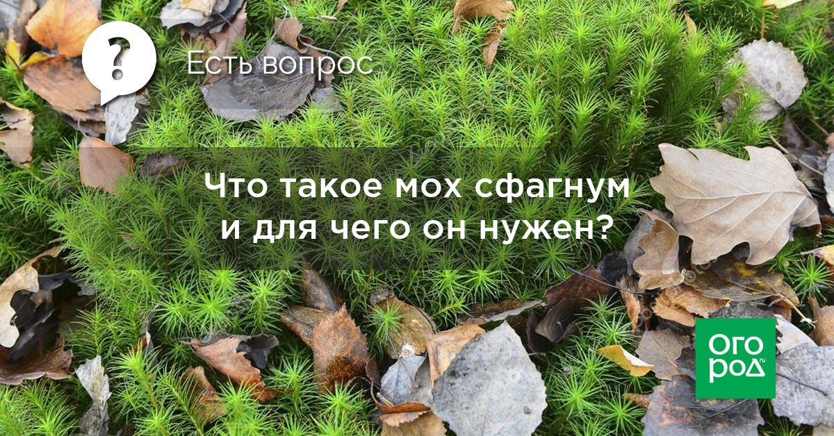Есть вопрос: что такое мох сфагнум и для чего он нужен?
