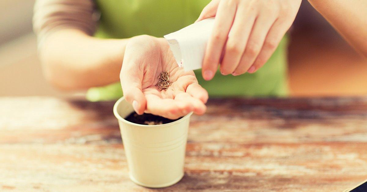 Самые эффективные методы проращивания семян в домашних условиях