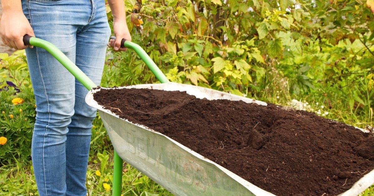 Торф как удобрение: для каких растений лучше подходит верховой и низинный{q} Польза и вред для огорода и для цветов