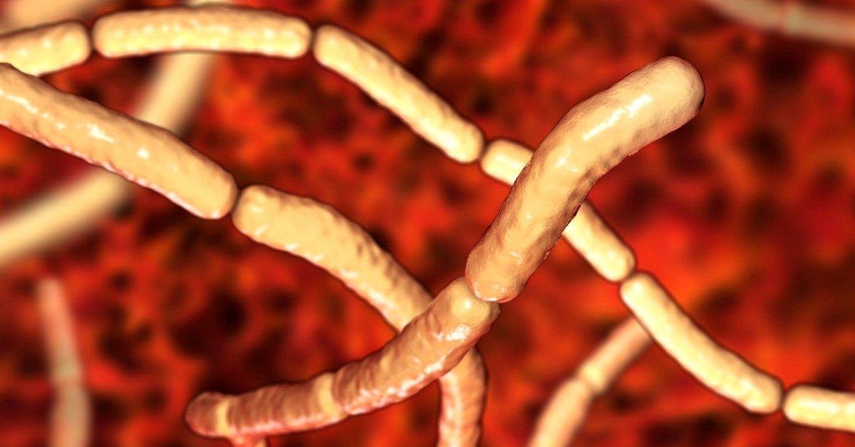 Бактерия сенной палочки Bacillus subtilis — польза, сенная палочка в кормах для собак