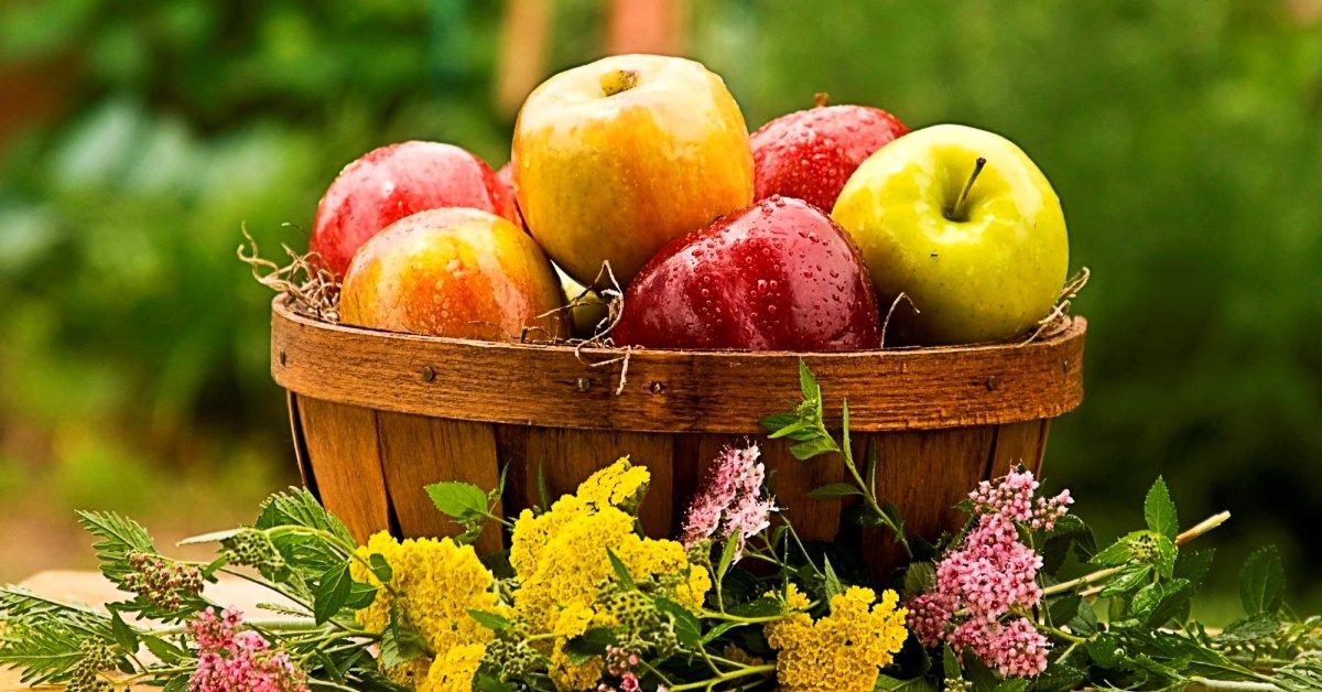 Яблоки польза и вред для человеческого организма