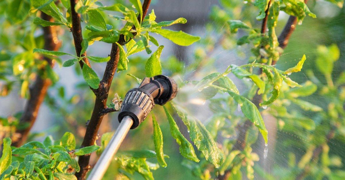 Сад весной, чем опрыскивать от вредителей и болезней