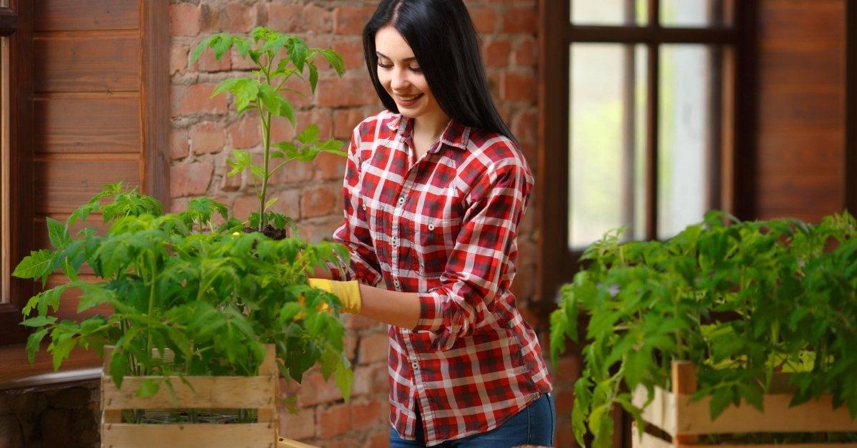 Подготовка семян помидор к посадке на рассаду обработка как замачивать