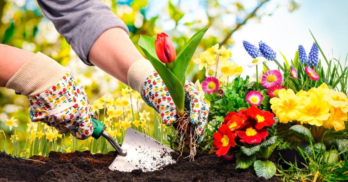Весенние первоцветы - посадка и подбор растений для озеленения участка