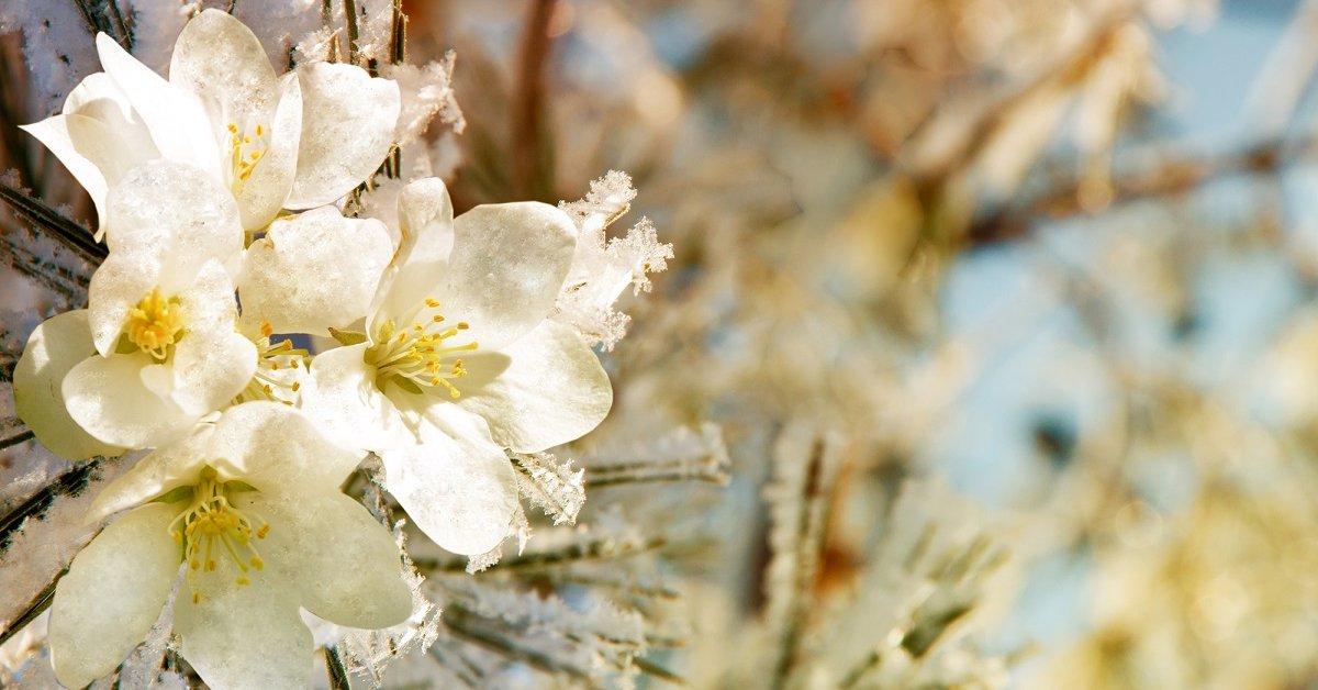 Как помочь растениям пережить заморозки