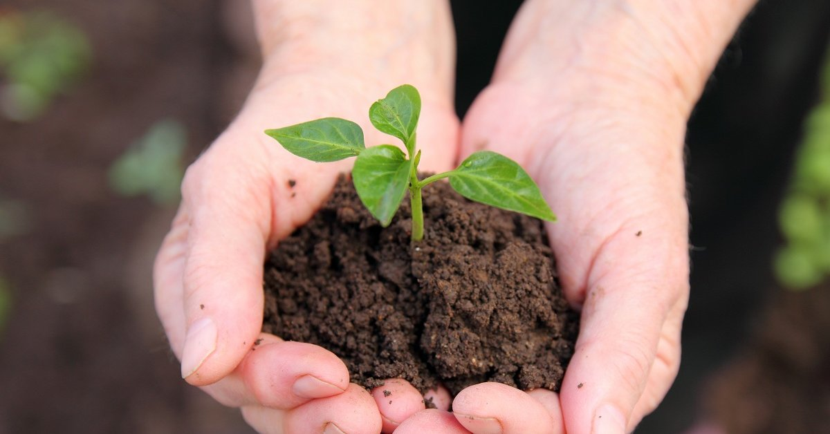 Какие растения на каких почвах растут