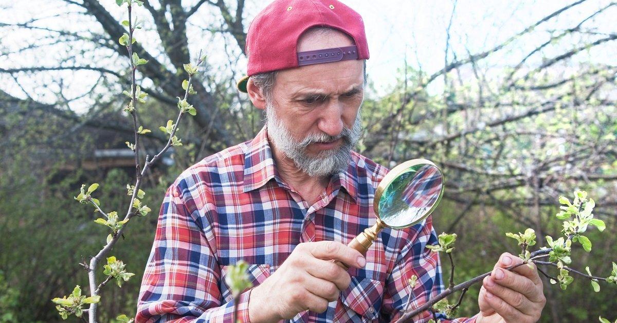 Уход за яблоней весной - Весенний уход за яблоней по месяцам