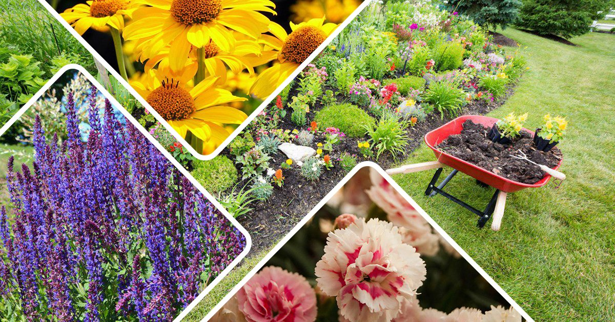 Виды летних цветов