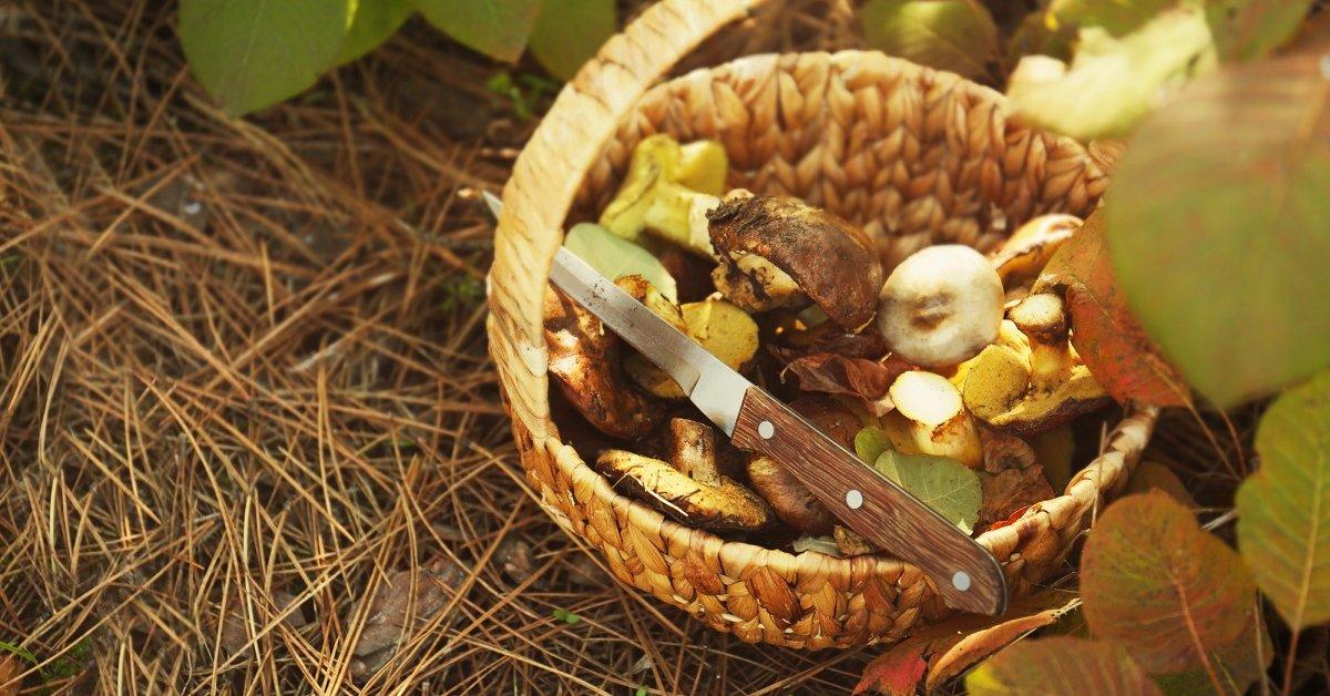 Когда лучше собирать грибы осенью. Когда идти за грибами – лучше время для сбора грибов