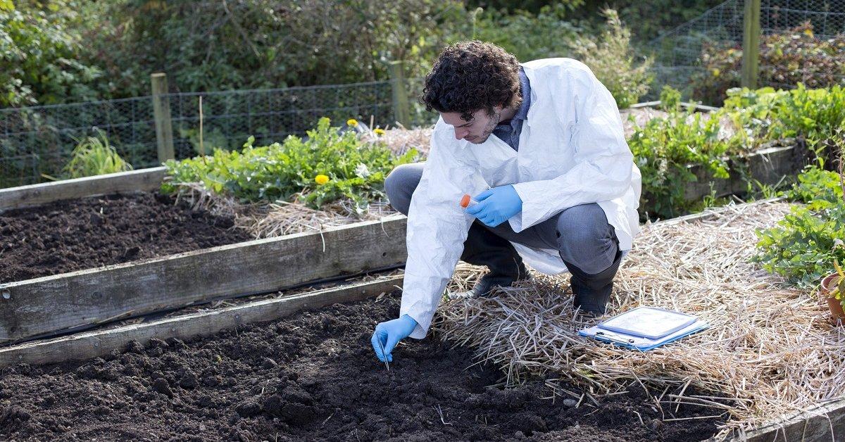 Зола раскисляет почву или нет