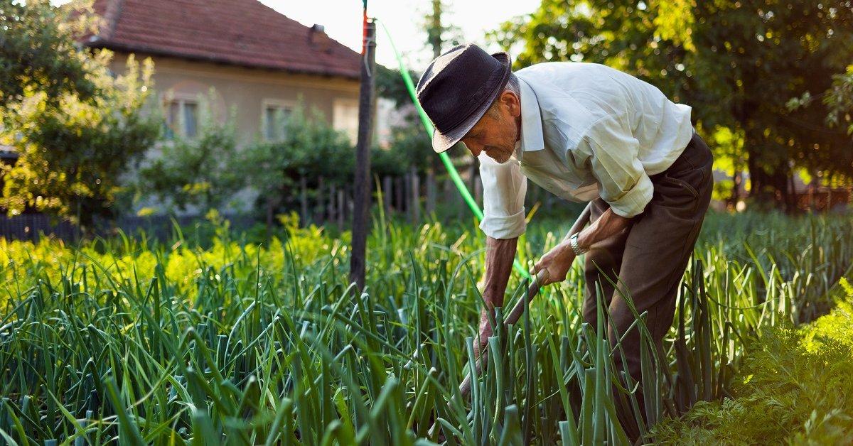 Пероноспороз луковых культур как вылечить и не допустить
