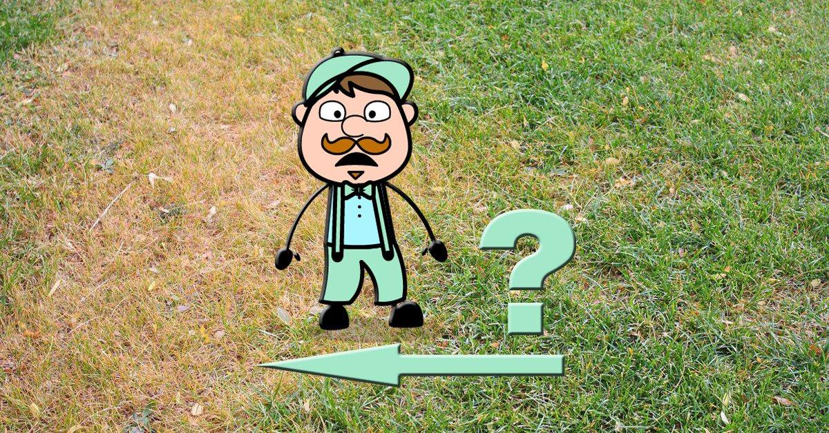 Почему желтеет газон — Горгазон