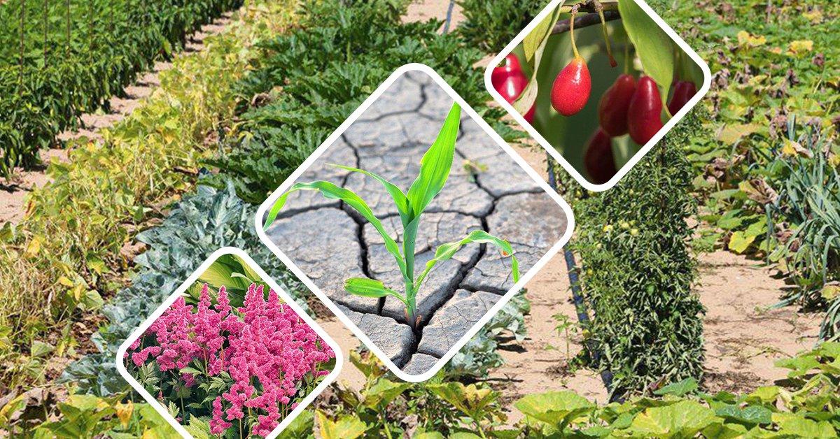 Какая почва нужна для винограда кислая или щелочная нужный ph