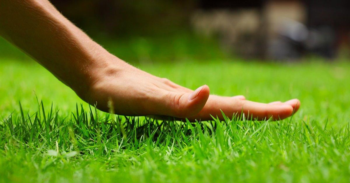 Как подготовить землю для газона осенью