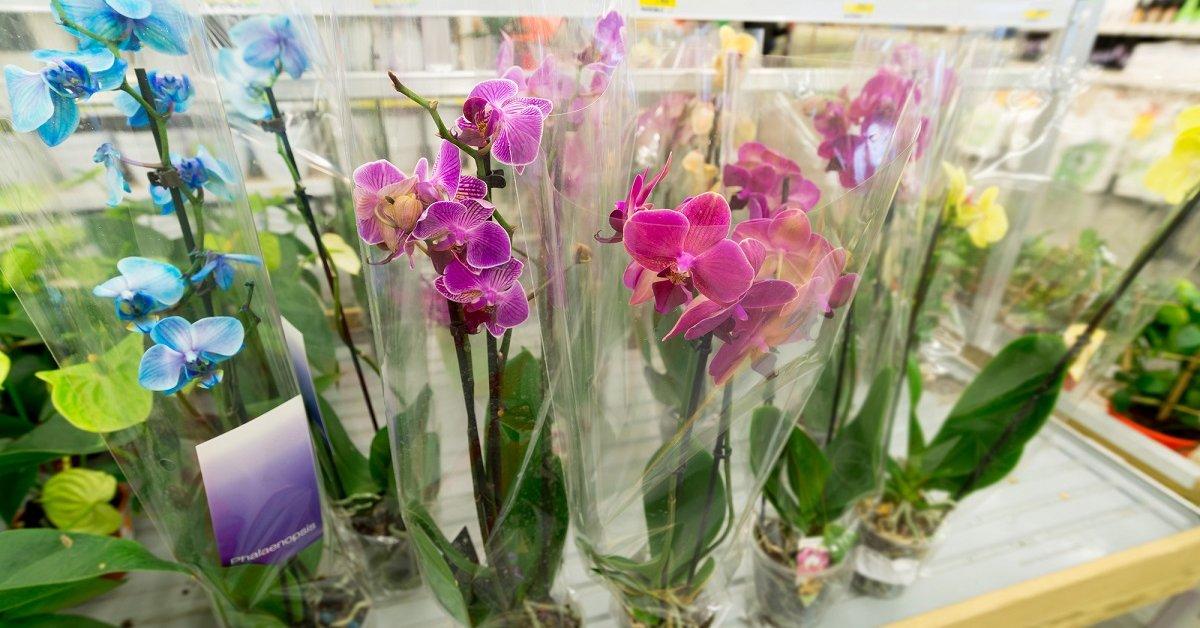 Как должна выглядеть здоровая орхидея