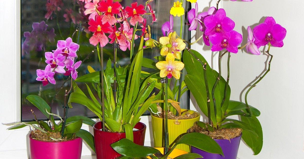 Орхидеи и подобные уход
