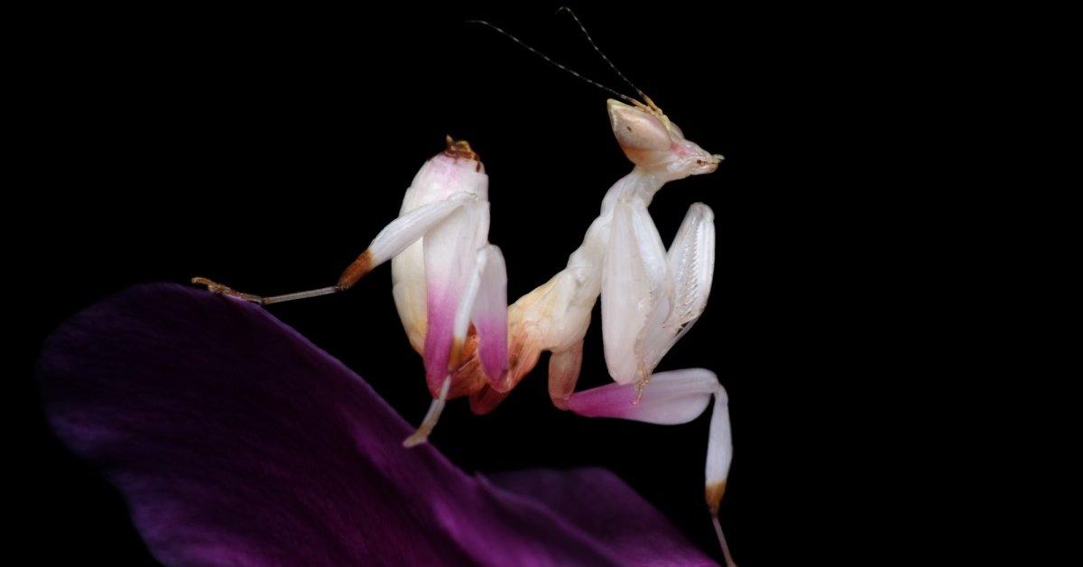 Черные букашки на орхидее