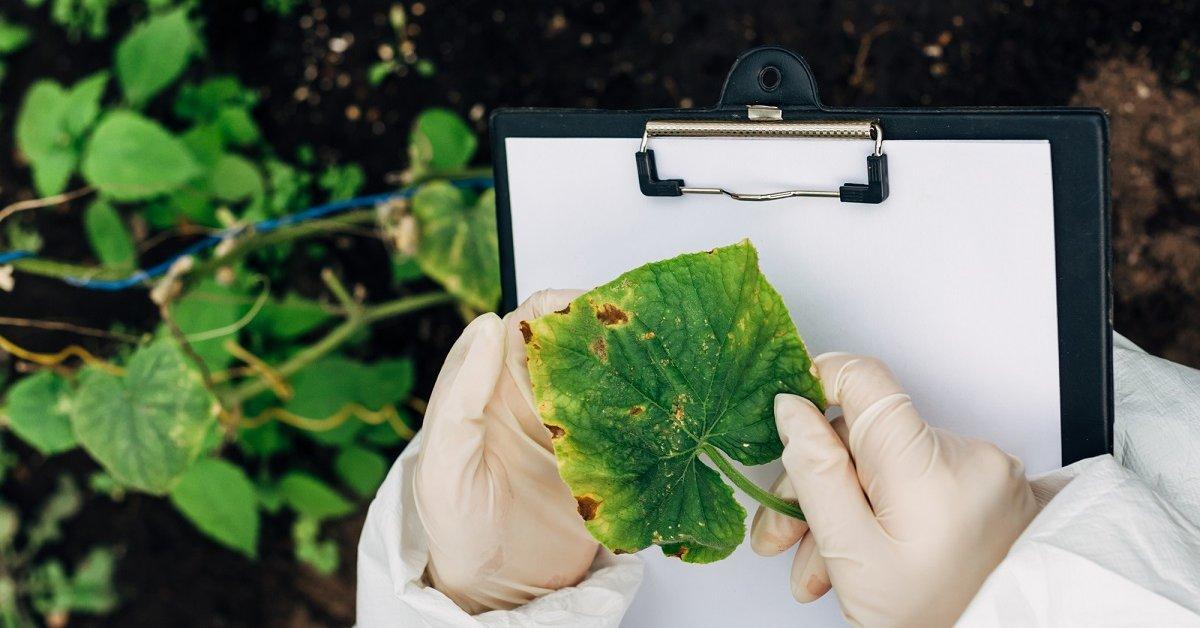 Борьба с вредителями и болезнями огурцов