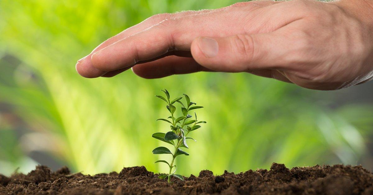 Микробиологические средства защиты растений.