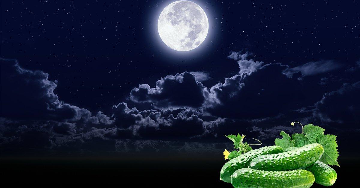 Благоприятные дни для посадки огурцов в 2020 году в открытый грунт по лунному календарю