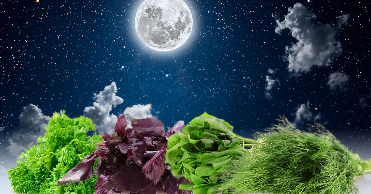 Уборка лука по лунному календарю 2020: сроки сбора урожая