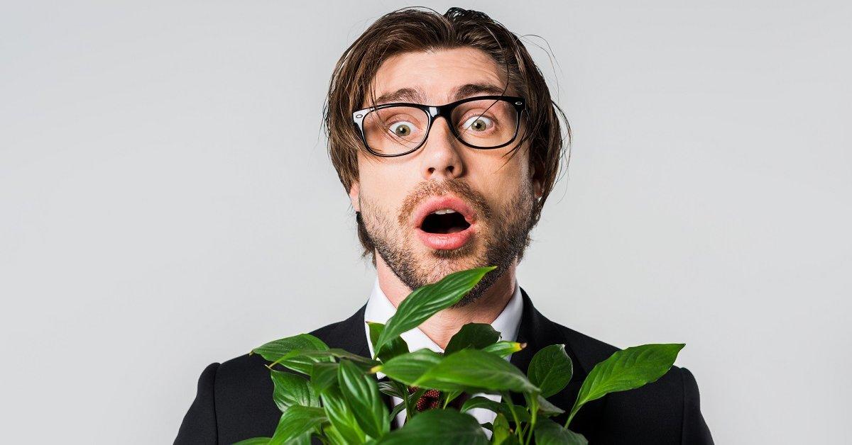 Почему в доме не растут цветы: приметы и суеверия