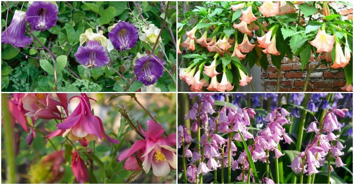 Цветы похожие на колокольчики: виды и описания